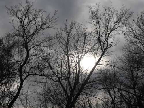 Trees Spooky Bare Trees Silhouette