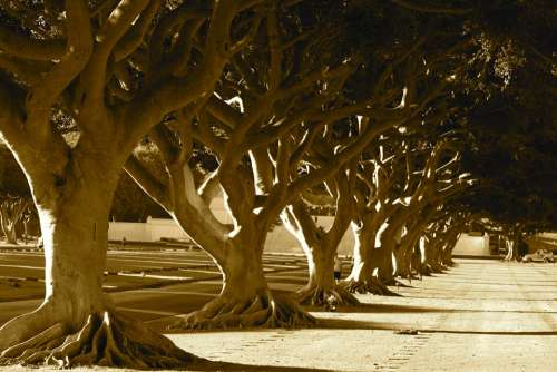 Trees Nature Sepia Landscape Park Outdoor