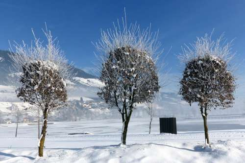 Trees Winter Snow Foliage Wintry White Nature