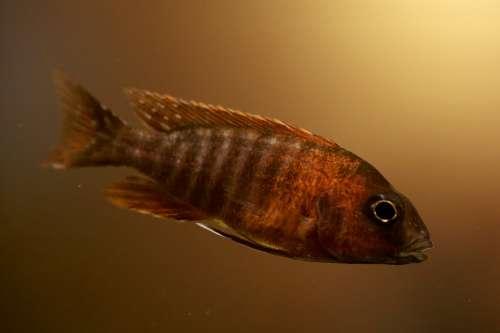 Tropical Fish Fish Aquarium Fish Tank Water