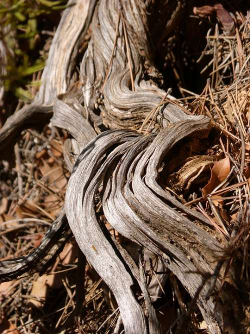 Trunk Stem Wood Knotty Root