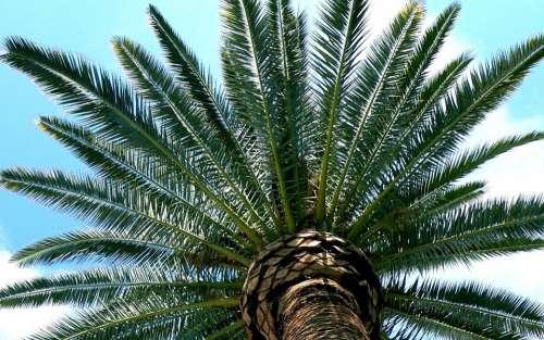 Tucson Desert Palm Branches Southwest Sky