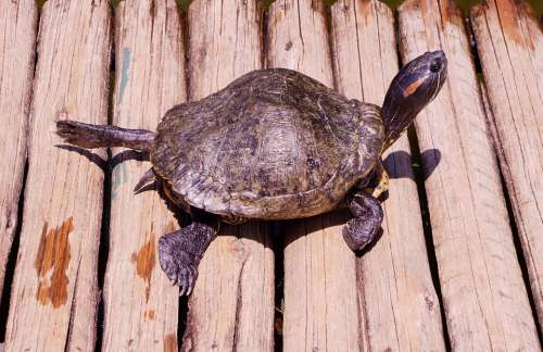 Turtle Sun Nature Animal Summer Tropic Wood