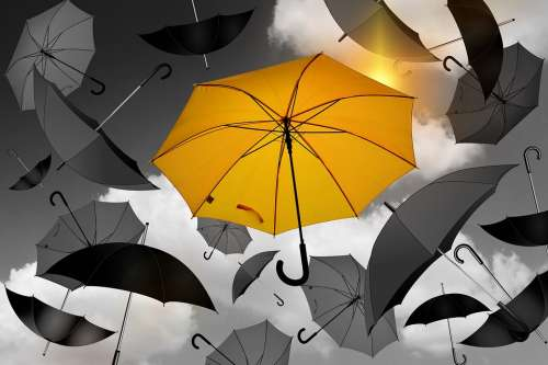Umbrella Yellow Black White Selection Especially
