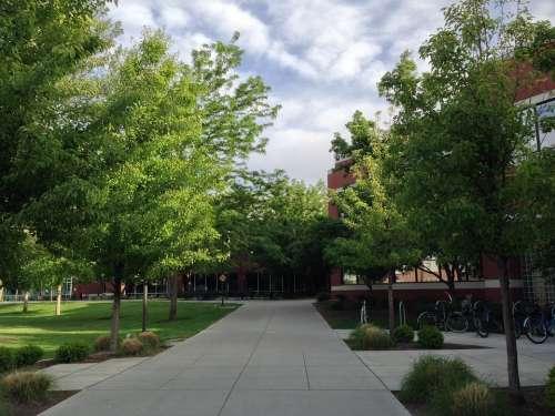University Trees Sky