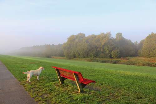View Foggy Dyke Bank Dog Forest Reed Nature