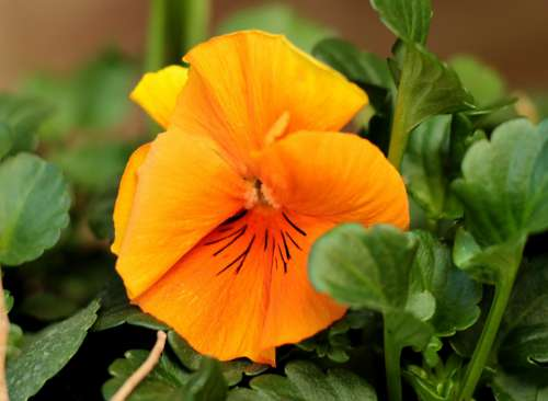 Violet Orange Yellow Flower Green Garden Plant
