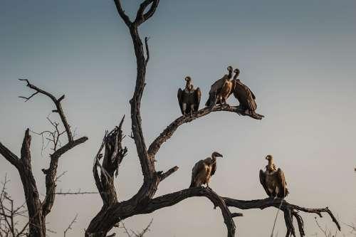 Vultures Bird Watching Wildlife Outdoors Highway