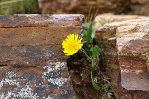 Wall Flower Macro Stone Wall Nature Close Up