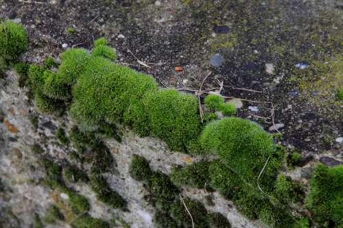 Wall Moss Green Stone