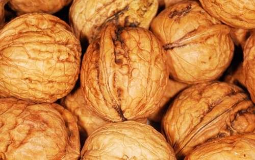 Walnut Walnuts Nuts Brown Nut Healthy Natural