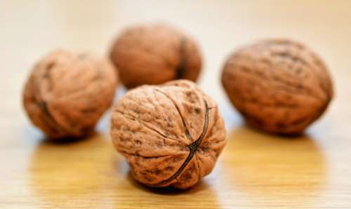 Walnuts Nuts Healthy Shell Brown Tasty Protein