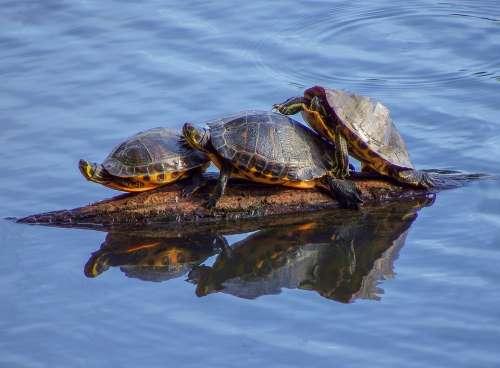 Water Animals Lake Creature