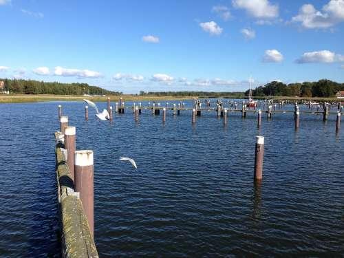 Water Gulls Darß