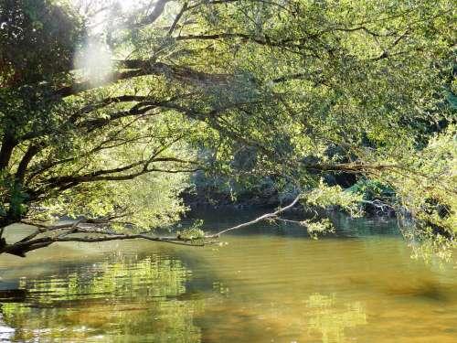 Water Brook Nature Reflection Natural Water