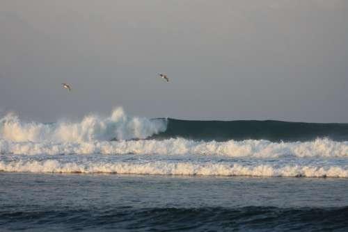 Waves Birds Golf Sea