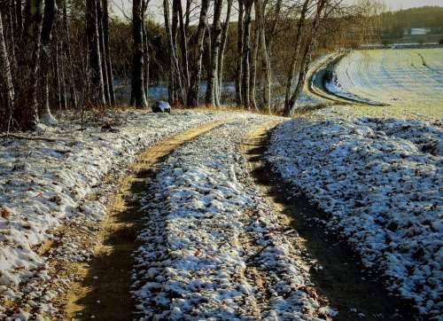 Way Forest Field Landscape Winter