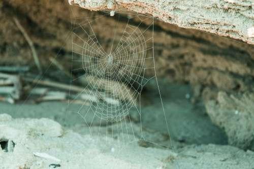 Web Beach Sea Puglia