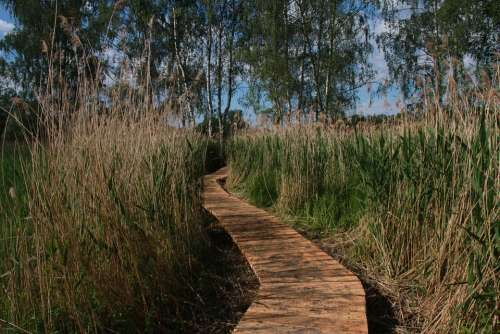 Wetland Hate Pavement Jablonne In Podjestedi