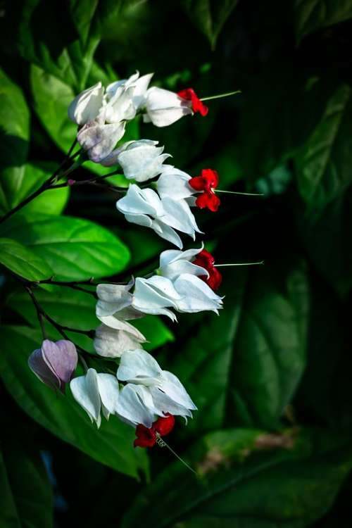 White Flowers Greenhouse Botanical Garden Nature