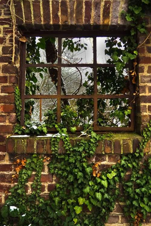 Window Ivy Facade Climber Plant Wall Hauswand
