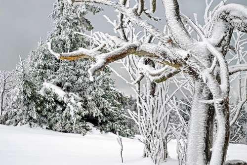 Winter White Cold Snow Snow Magic Tree