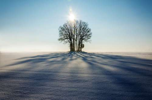 Winter Landscape Tree Lonely Shadow Sunset Day