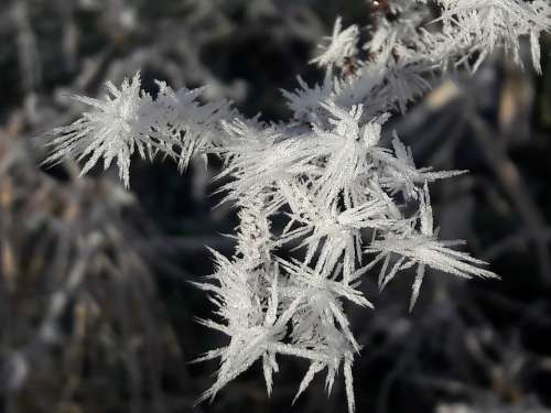 Winter Ice Nature Cold Frozen Outdoor Frost