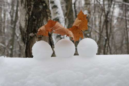 Winter Snow Frost Cold Snowballs Landscape Forest