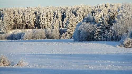 Winter Frost Leann Snow Nature Landscape Trees
