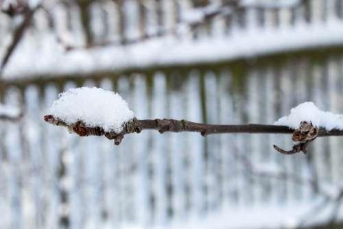 Winter Snow Frost Tree Sprig Ośnieżona Branch