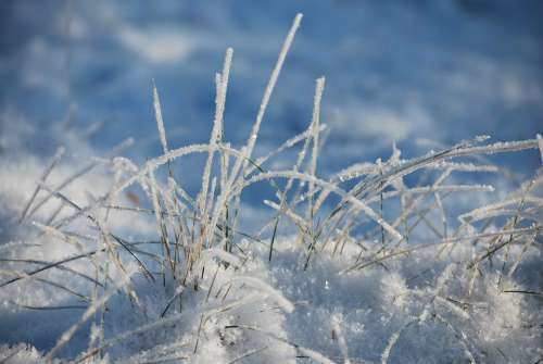 Winter Frost Nature