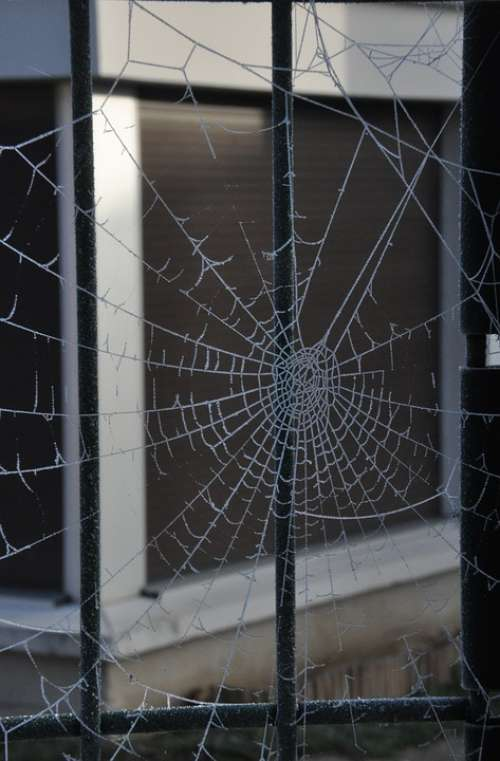 Winter Spider Web Frost
