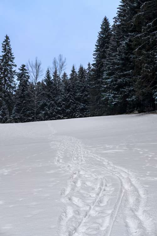 Winter Snow Away Traces Footprints Landscape