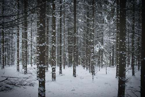 Winter Forest Nature Snow Landscape Cold Wintry