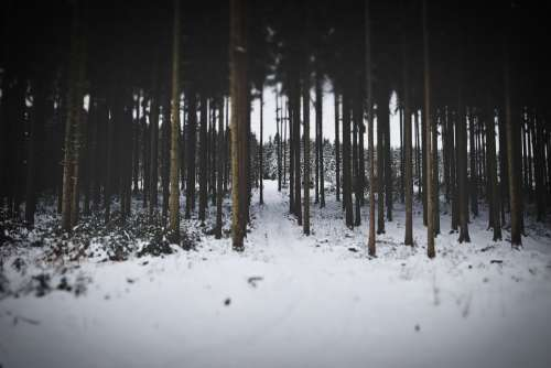 Winter Forest Snow Cold Wintry Idyllic Wilderness