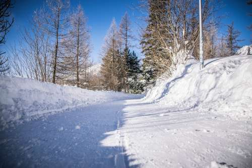 Winter Frost Snow Nature Path