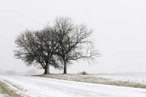 Winter Landscape Snow Nature Trees Fog Frost
