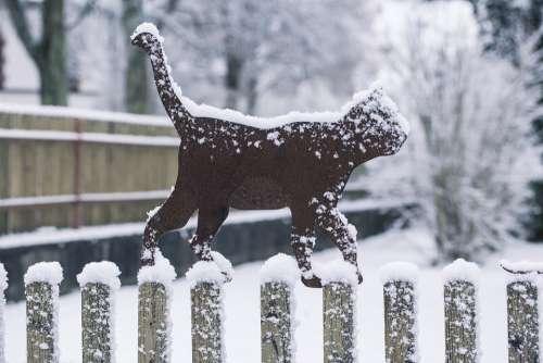 Winter Cat Snow Cold Snowing Wintry Kitten Snowy