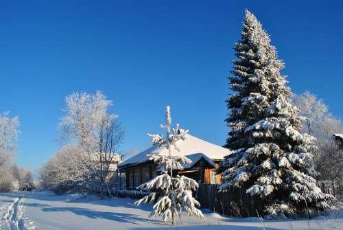 Winter Village Snow Landscape Tree