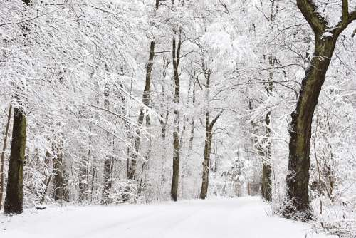 Winter Wintry Forest Snowy Forest Hoarfrost Forest