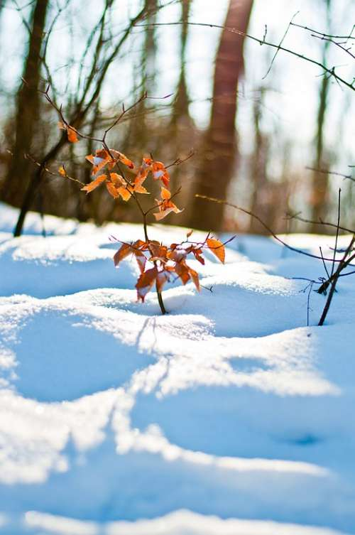 Winter Snow Frost Nature Forest Landscape