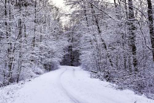 Winter Hoarfrost Snow Forest Wintry Forest