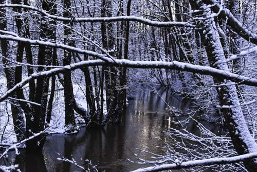 Winter Winter Forest Reflection Forest Snow Nature