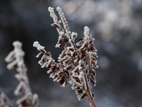 Winter Icing Macro Nature Rime Landscape Frost