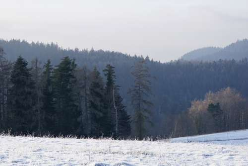 Winter Black Forest Cold Nature Wintry Snowy