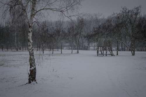 Winter Tree Snow Cold Nature White Dark Fog