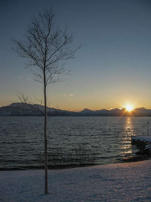 Winter Sunrise Birch Snow Sky Landscape Norway