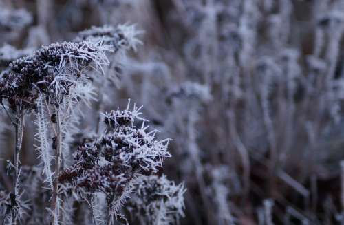Winter Cold Frost Snow Nature Wintry Winter Magic
