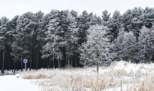 Winter Snow Forest Snowy Forest Wintry Forest